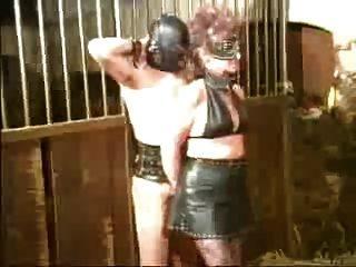 Sklaven Ausbildung Im Stall